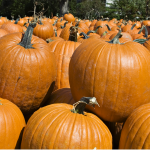 do you know the benefits of pumpkins?