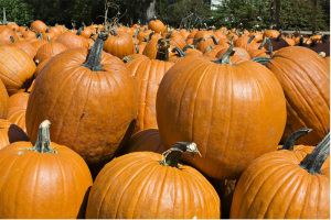 pumpkins and their benefits